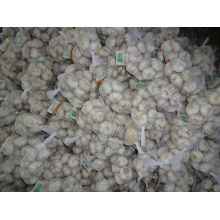 Fresh Normal White Garlic High Quality