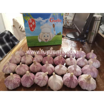 Garlic new crop are starting