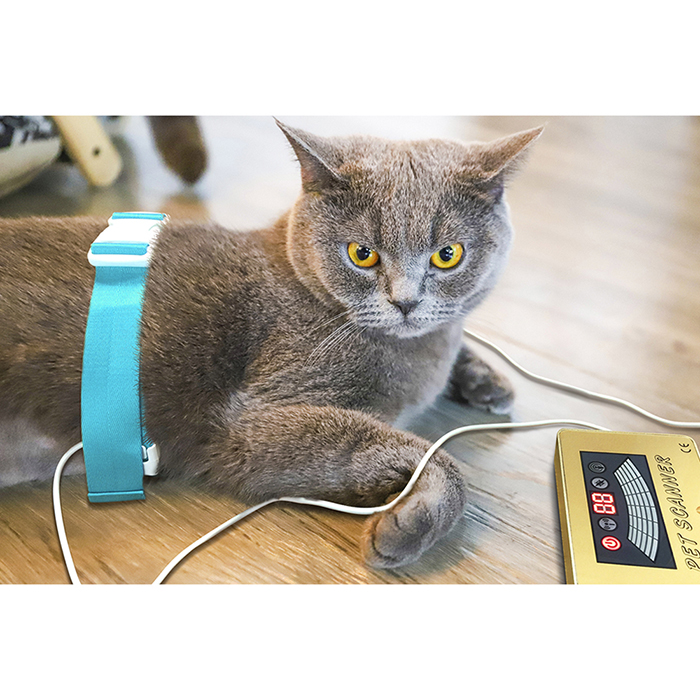 SSCH PET SCANNER QUANTUM ANALYZER FOR DOG CAT