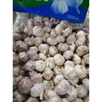 how to store fresh garlic long term