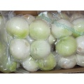 Fresh Peeled Onions With Best Quality