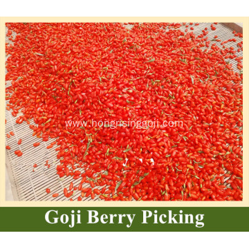 Goji Berries Juice For Sale