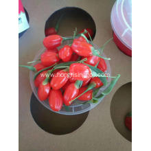 Ningxia Factory Conventional Goji Berry