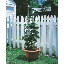 Customized for White Garden Obelisk Garden Obelisk Pot Obelisk Plant support export to Estonia Supplier