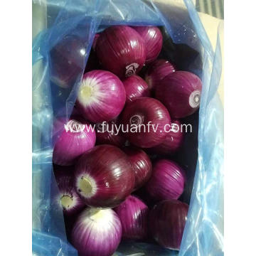 Peeled Red Onion to Australia