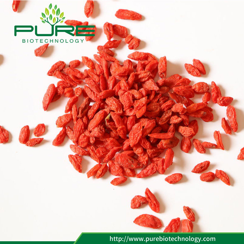 New arrived red goji berry