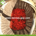 Wholesale Nutrition Dried Goji Berries Organic