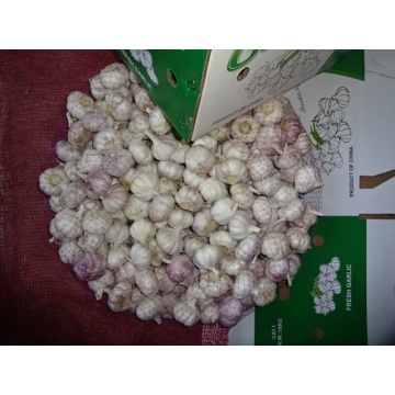 2019 Fresh Normal White Garlic Best Quality
