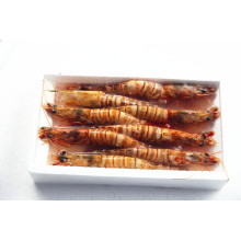 Hot Sale Sea Frozen Shrimp