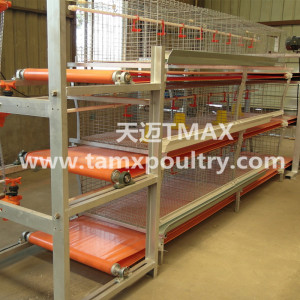 Broiler cage system in Chicken