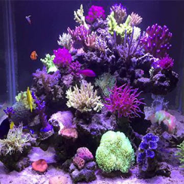 Marine LED Aquarium Light for Coral SPS LPS