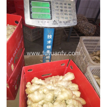 250g qualified air dried ginger