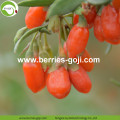 Factory Wholesale Dried Red Wolfberry