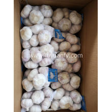 normal white garlic 2019 new garlic