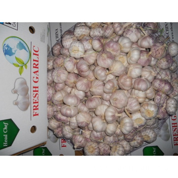 Supply All The Year Normal White Garlic