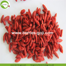 Factory Supply Fruits Bulk B Grade Goji Berry