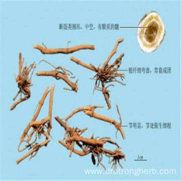 Top quality Cynanchum stauntonii Swallowwort Rhizome baiqian