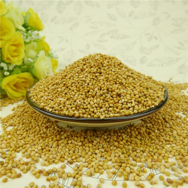 Natural Yellow Millet In Husk For Bird Feeds