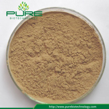 Herbal Extract Angelica Sinensis Extract 1% Ligustilide