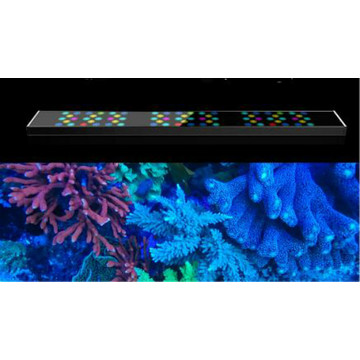 Solas Aquarium Sunrise / Sunset / Lunar LED do Reef Coral