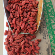 10 Years for Slimming Diet Berry With Low Price Conventional Chinese Tibetan Dried Goji export to Bulgaria Supplier