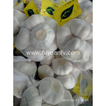 garlic supply by factory