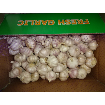 High Quality Fresh Normal White Garlic 5.0cm