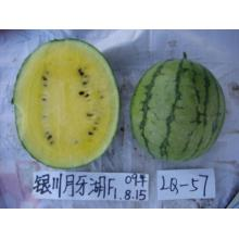Medium maturity f1 hybrid  watermelon seeds