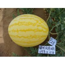 Early maturity yellow watermelon seeds