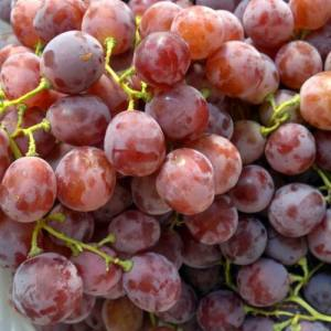 Fresh and Delicious Red Grape with Good Quality