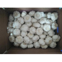 Jinxiang Pure White Garlic Best Quality 2019