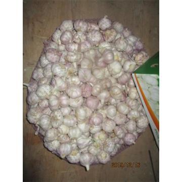 2019 Normal White Garlic Fresh Wholesale