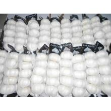 10 Years manufacturer for Pure White Fresh Garlic New Crop First level Pure White Garlic export to Thailand Exporter