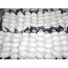 Good Quality for Fresh Pure White Garlic Pure white garlic small size export to Switzerland Exporter