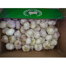Normal Garlic Fresh New Crop