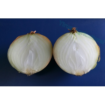 New Crop Reliable Quality Yellow onions
