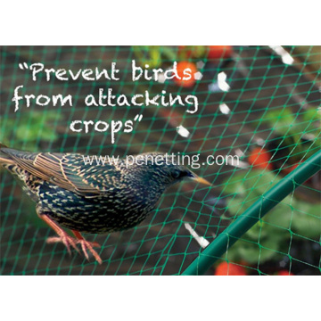 polyethylene anti bird netting