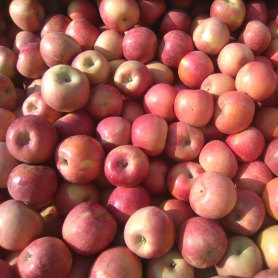 Fresh rich selenium apple sufficient supply