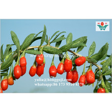 Gou Qi Top Grade Low Price Dried Fruit Goji