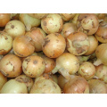Fresh Yellow Onion In High Quality