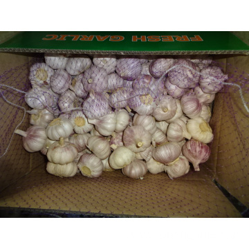 Crop 2019 Regular White Garlic