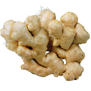 Fat Ginger of New Season