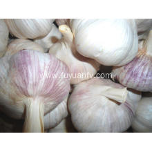 High quality fresh normal white garlic