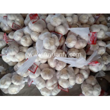 2019 normal white garlic to the European market