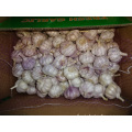 Regular White Garlic Fresh New Crop 2019