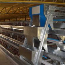A Type Chicken Farming Equipment