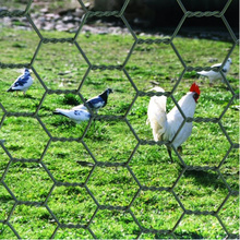 Hexagonal Chicken Quality Wire Netting