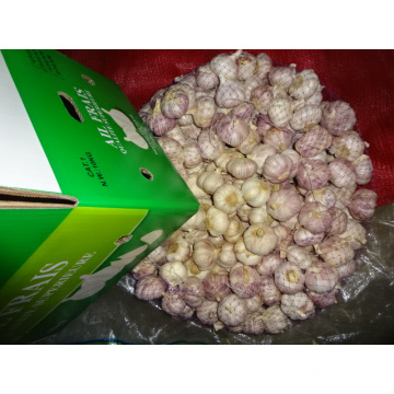 Size 5.0cm Normal White Garlic