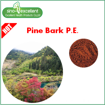 Natural Pine Bark Extract Powder Proanthocyanidins