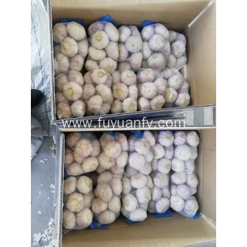 Selling normal white garlic
